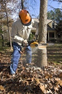 a person cutting a tree with chainsaw