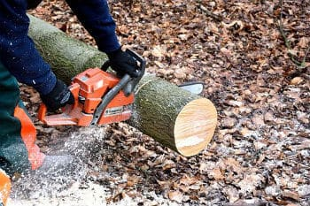 Male Worker Holding Small Chainsaw