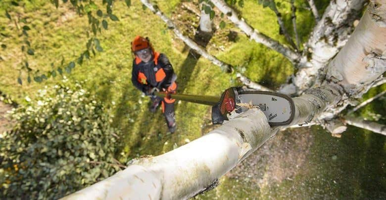 working with cordless pole saw
