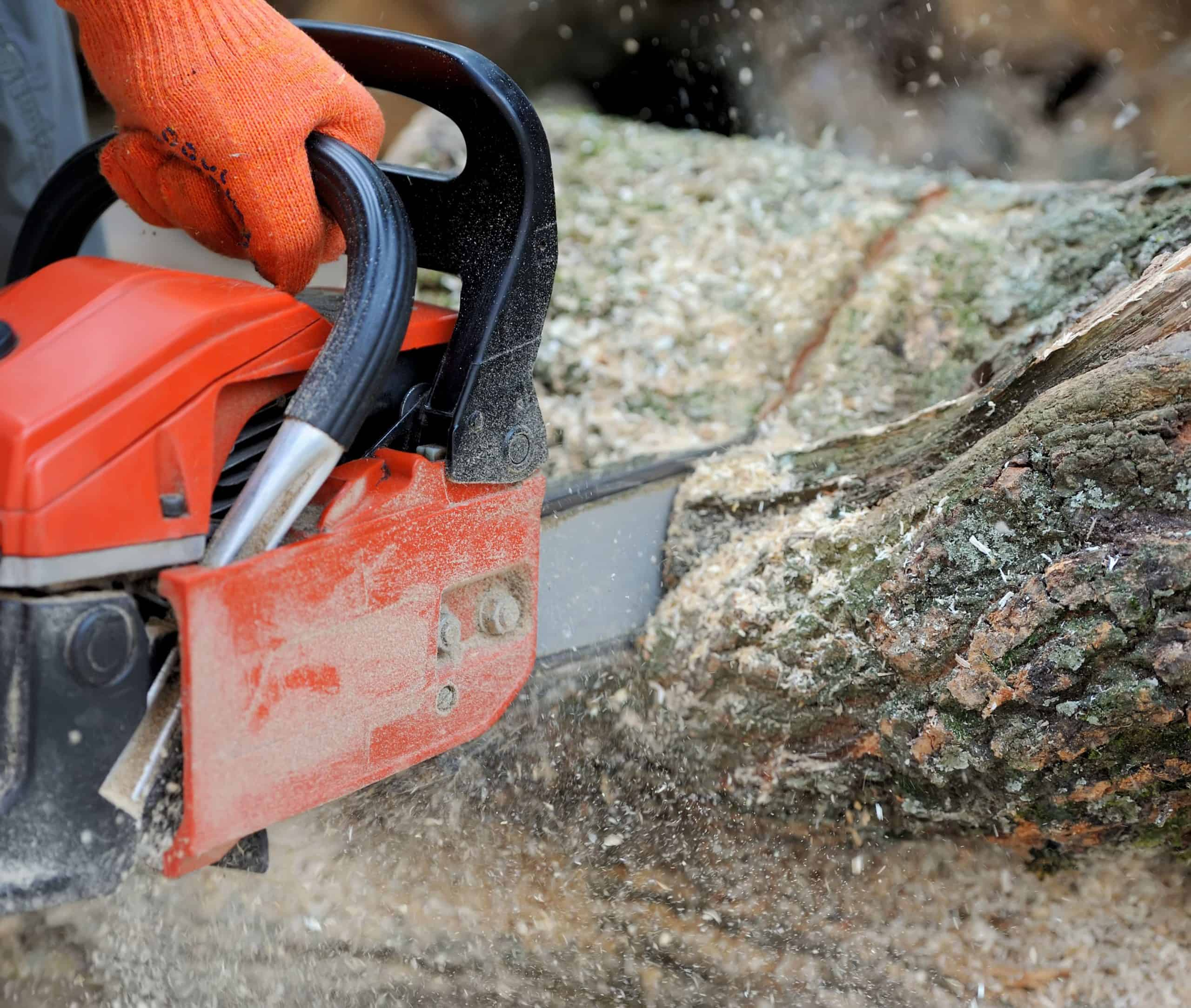 Cutting wood with a chainsaw using working gloves